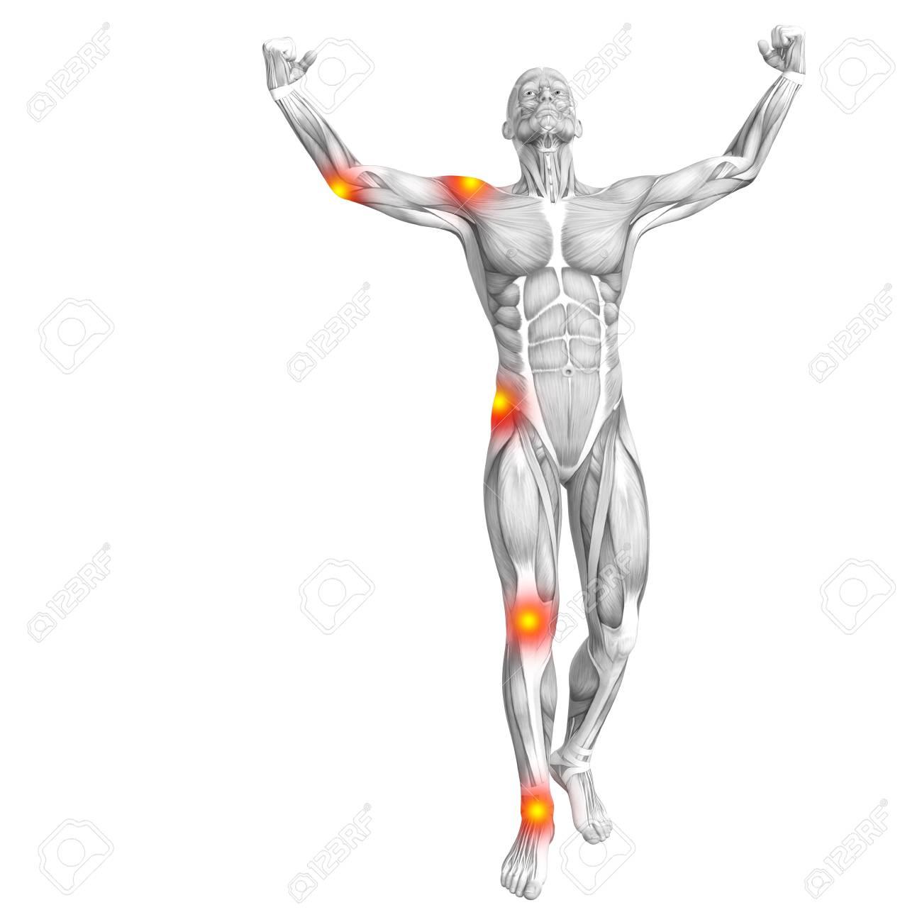 Ungewöhnlich Muskelanatomie Spiel Ideen - Menschliche Anatomie ...