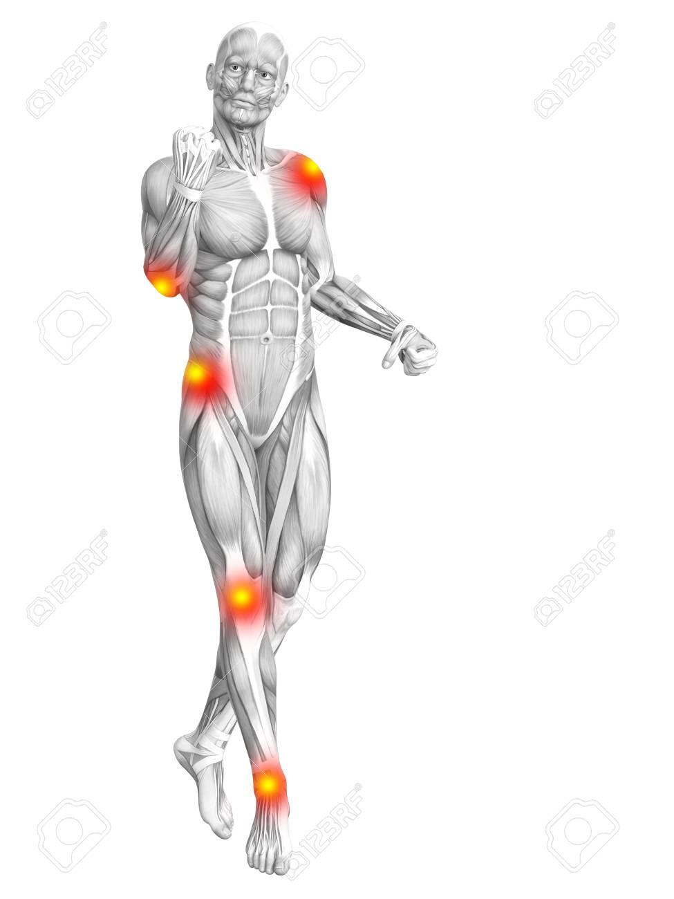 Fein Menschlicher Arm Muskelanatomie Ideen - Anatomie Ideen ...