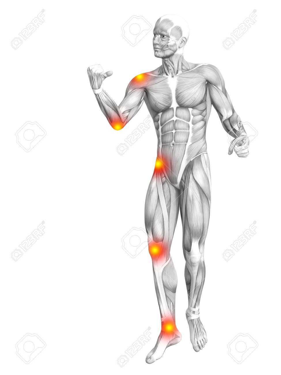Niedlich Kern Muskelanatomie Fotos - Anatomie Ideen - finotti.info