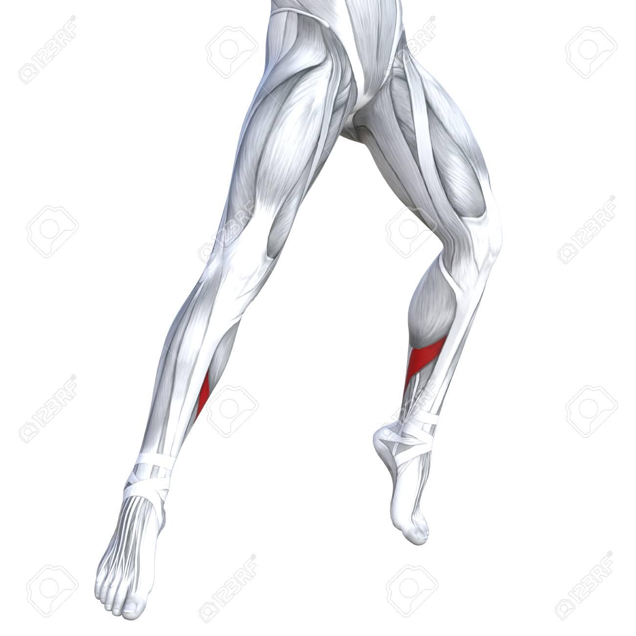 Concept Conceptual 3D Illustration Fit Strong Front Lower Leg ...