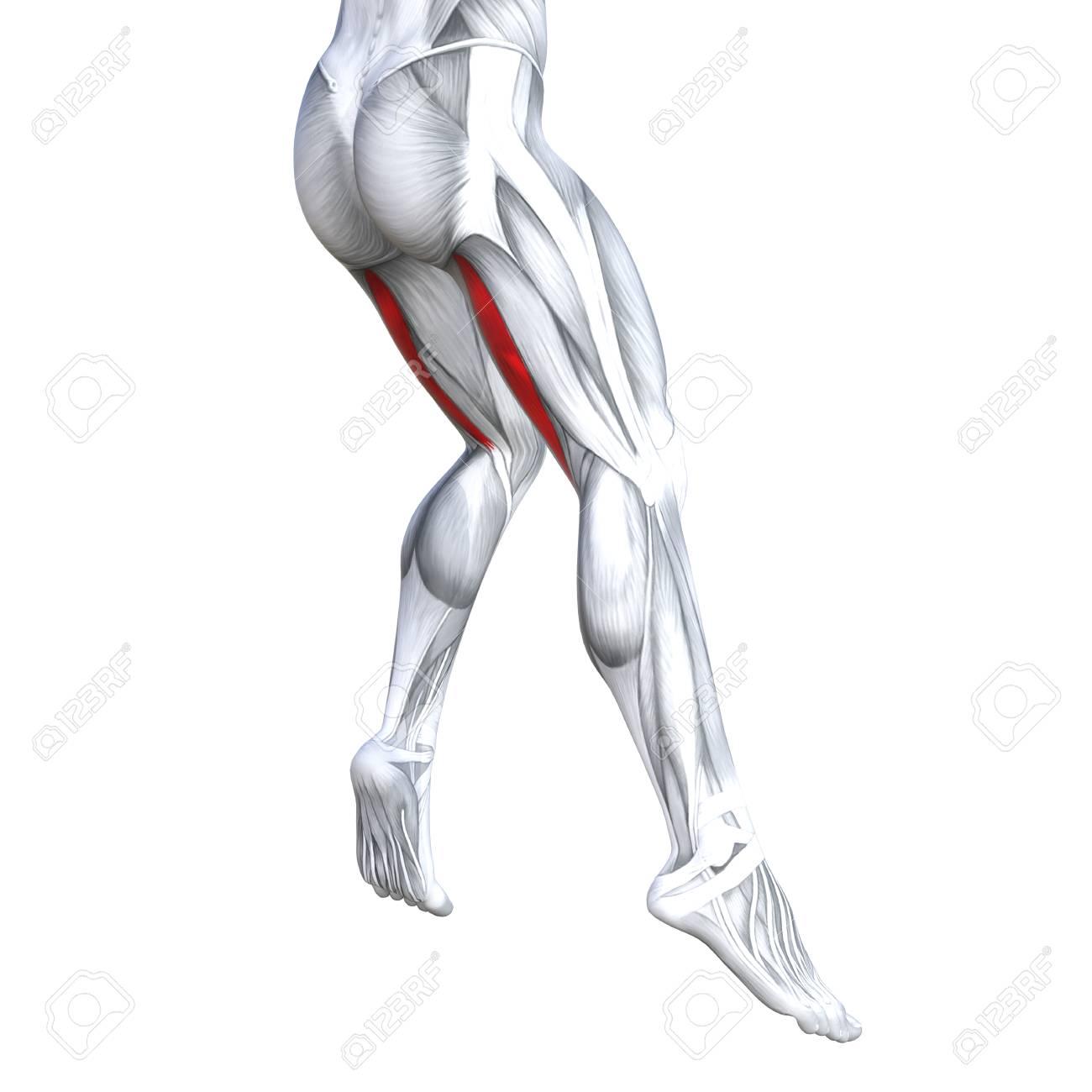 Concept Conceptual 3d Illustration Fit Strong Back Upper Leg Stock