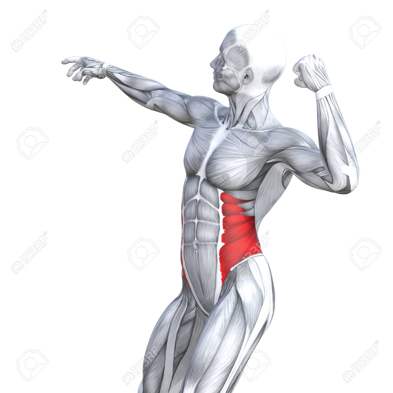 Concept Conceptual 3D Illustration Chest Fit Strong Human Anatomy ...