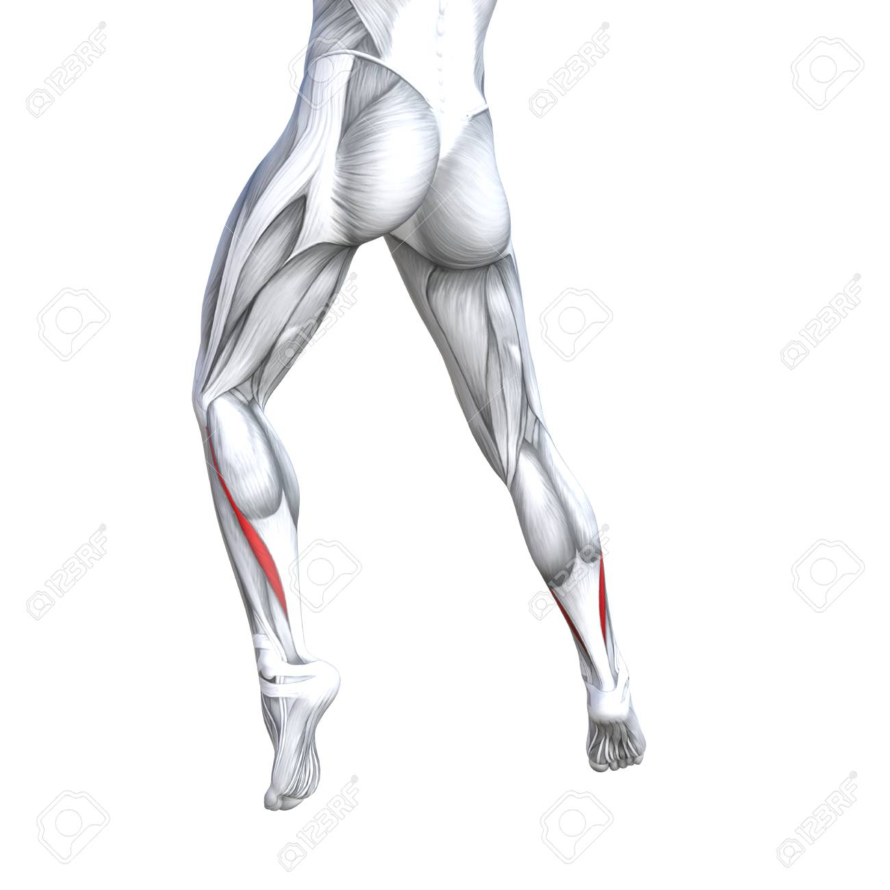 Concept Conceptual 3D Illustration Fit Strong Back Lower Leg.. Stock ...