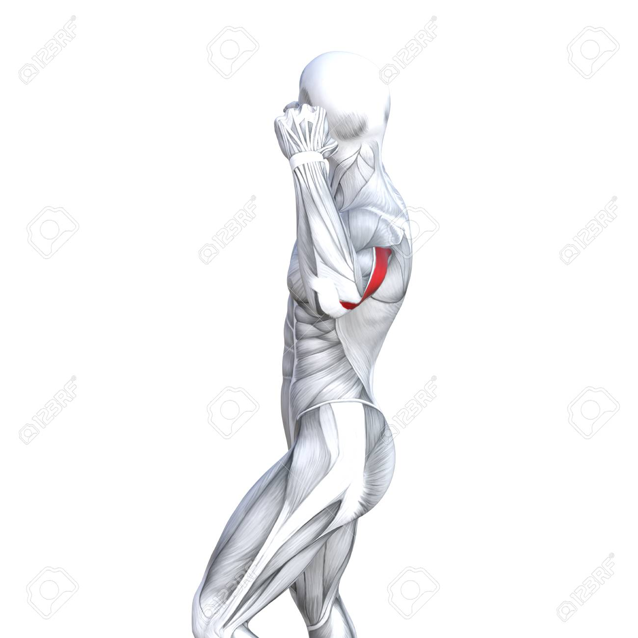 Concept Conceptual 3d Illustration Back Fit Strong Human Anatomy