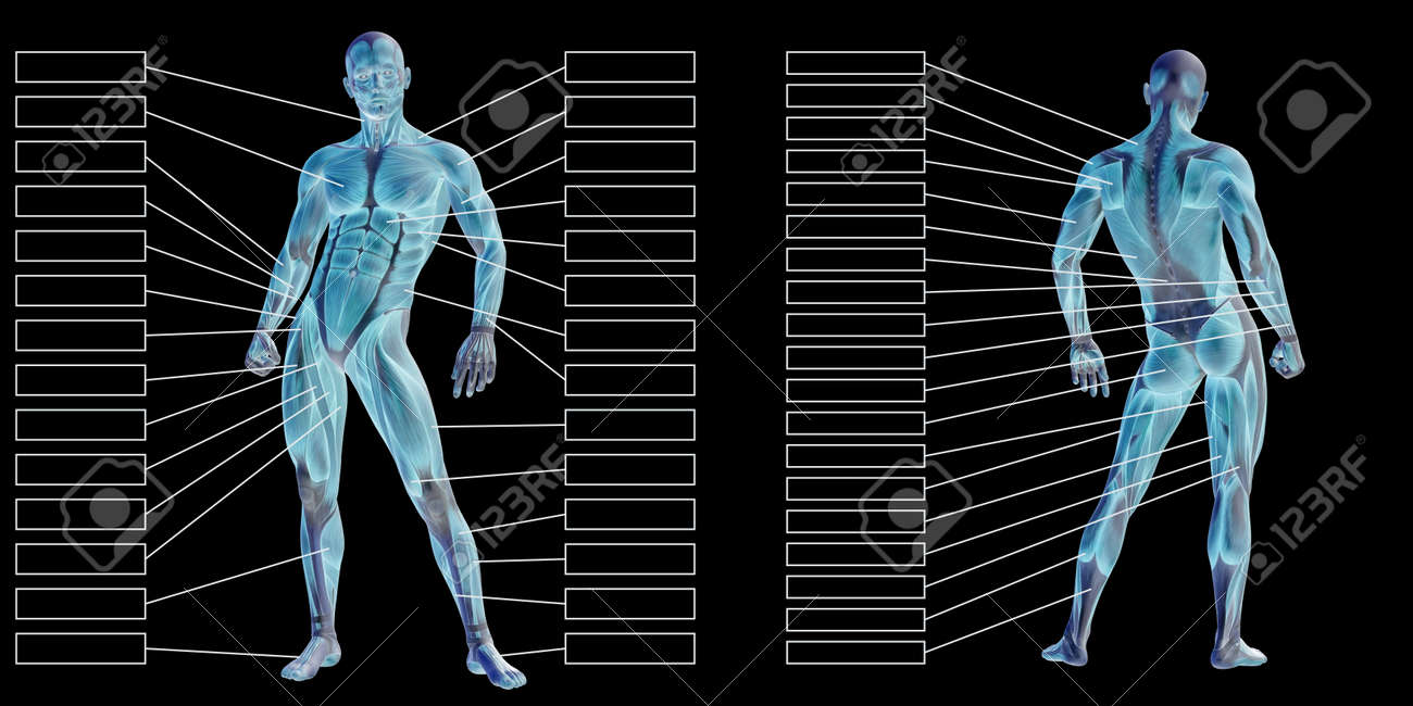 3D illustration of a concept human man anatomy and muscle textbox isolated on white background metaphor to body, tendon, spine, fit, builder, strong, biological, skinless, shape posture health medical - 160828489