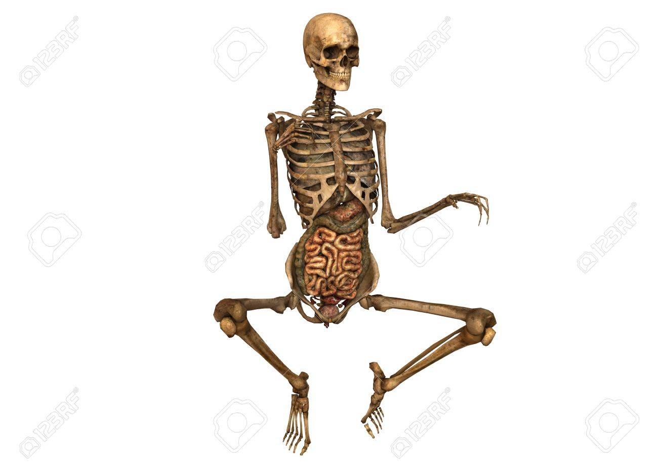 Female Skeleton With Detailed Anatomy Stock Photo Picture And