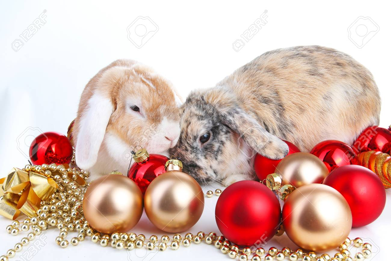 Christmas Animals Cut Lop Eared Rabbit Pet Friends On Isolated
