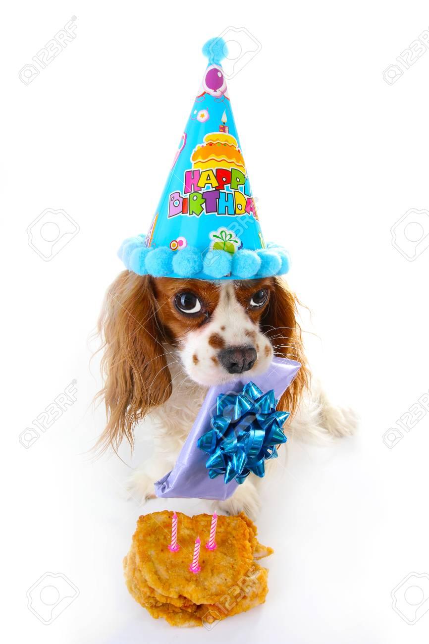 Happy Birthday Dog Photo Cavalier King Charles Spaniel Puppy Celebrate 3