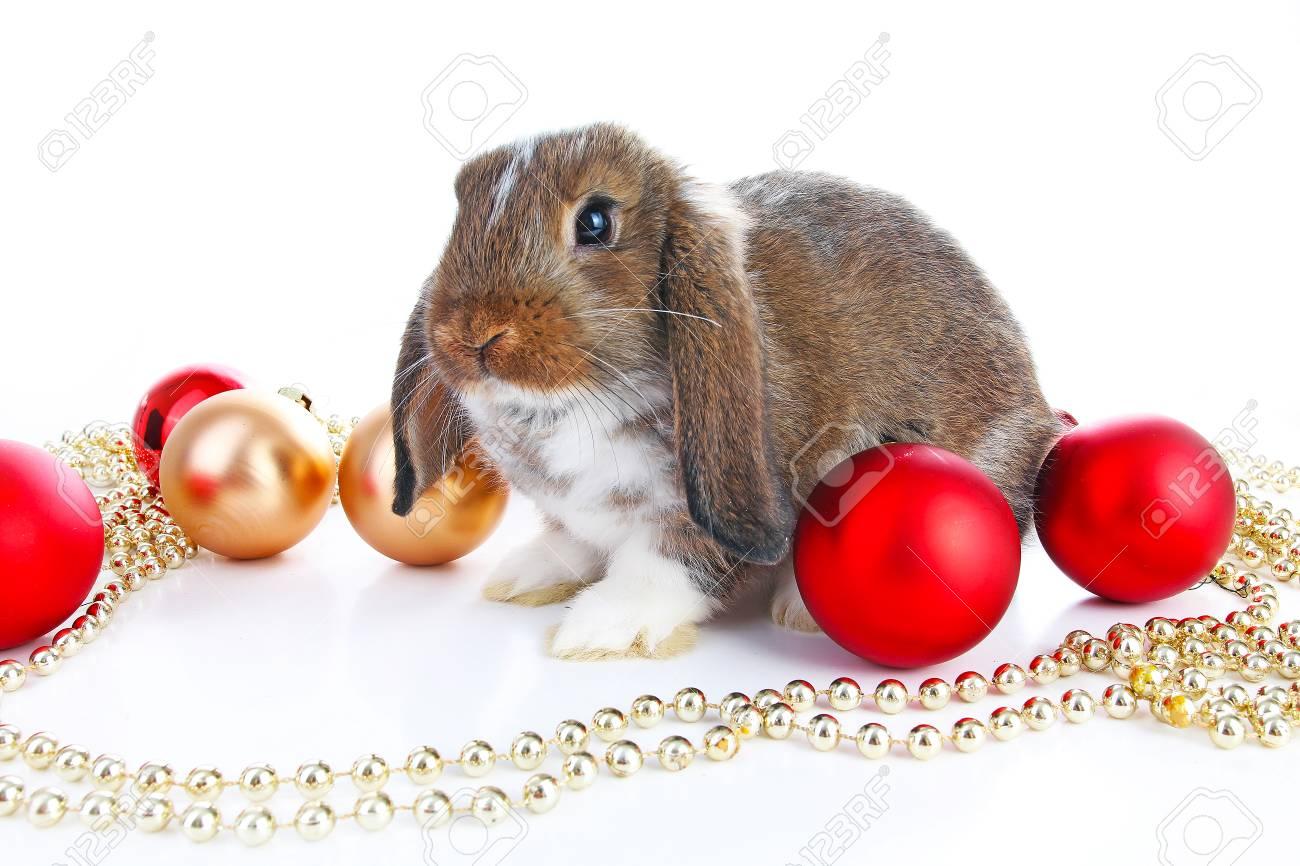 Christmas animals. Cute christmas rabbit. Rabbit bunny lop celebrate..