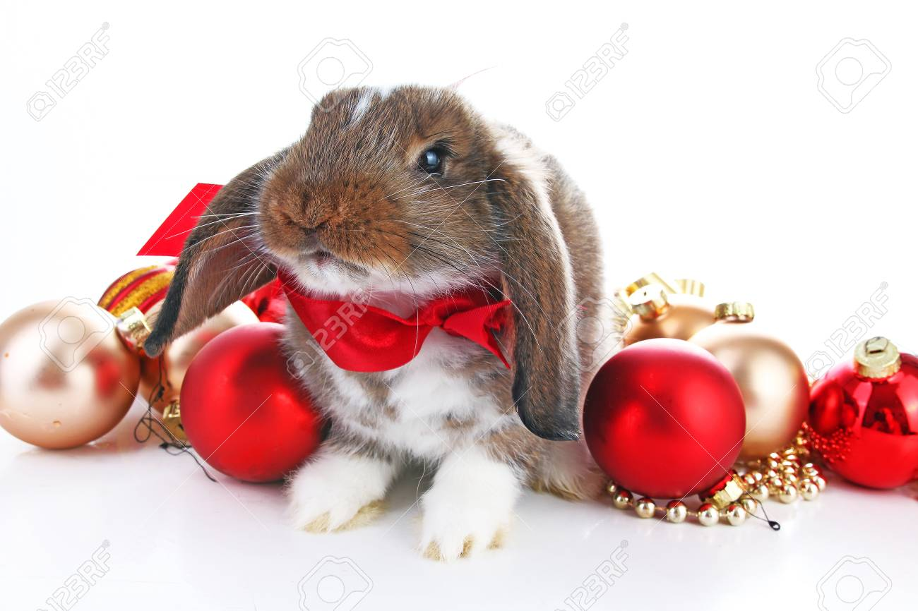Christmas animals. Cute christmas rabbit. Rabbit bunny lop celebrate..
