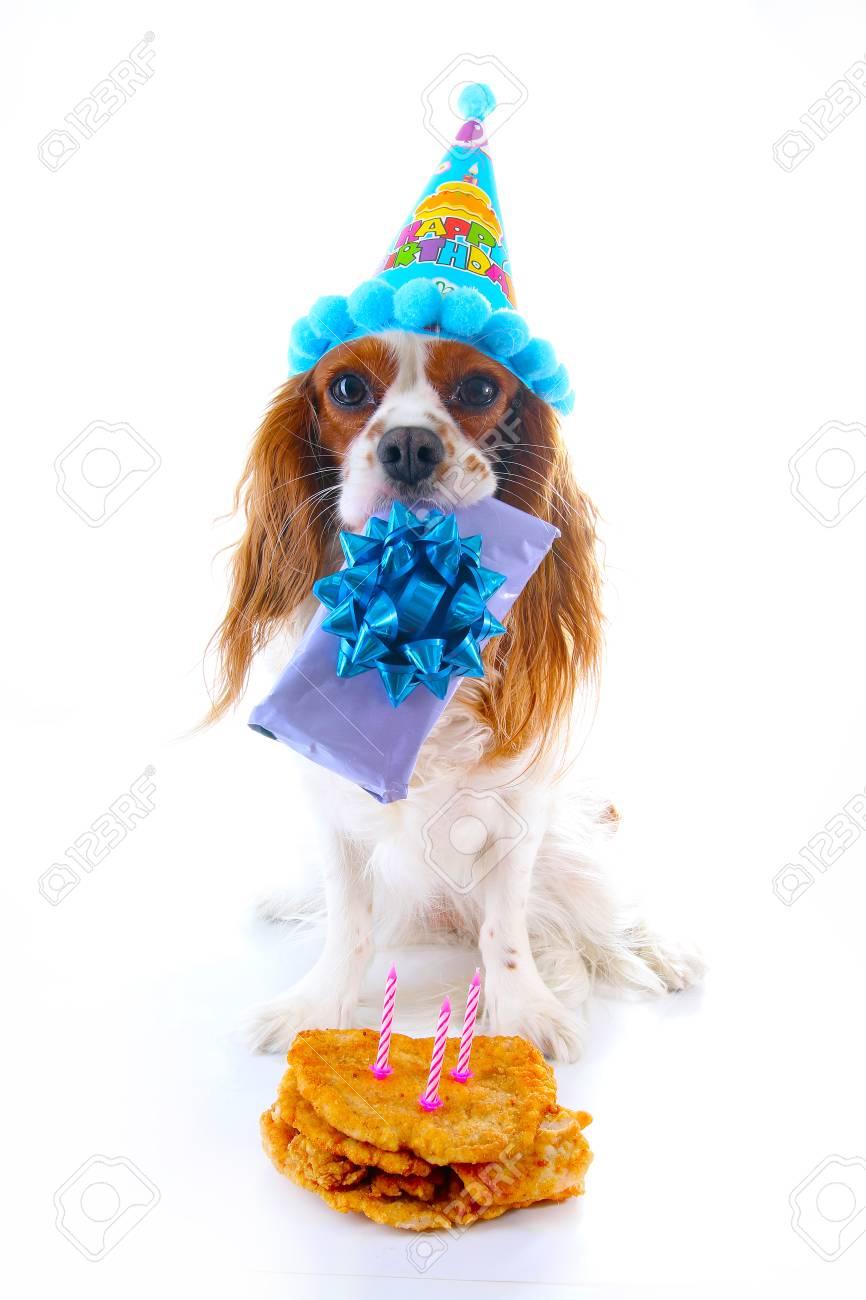 Photo De Chien Joyeux Anniversaire Cavalier Roi Charles Spaniel Chien Chiot Célébrer 3 Anniversaire Chiot De Trois Ans Avec Gâteau D Anniversaire