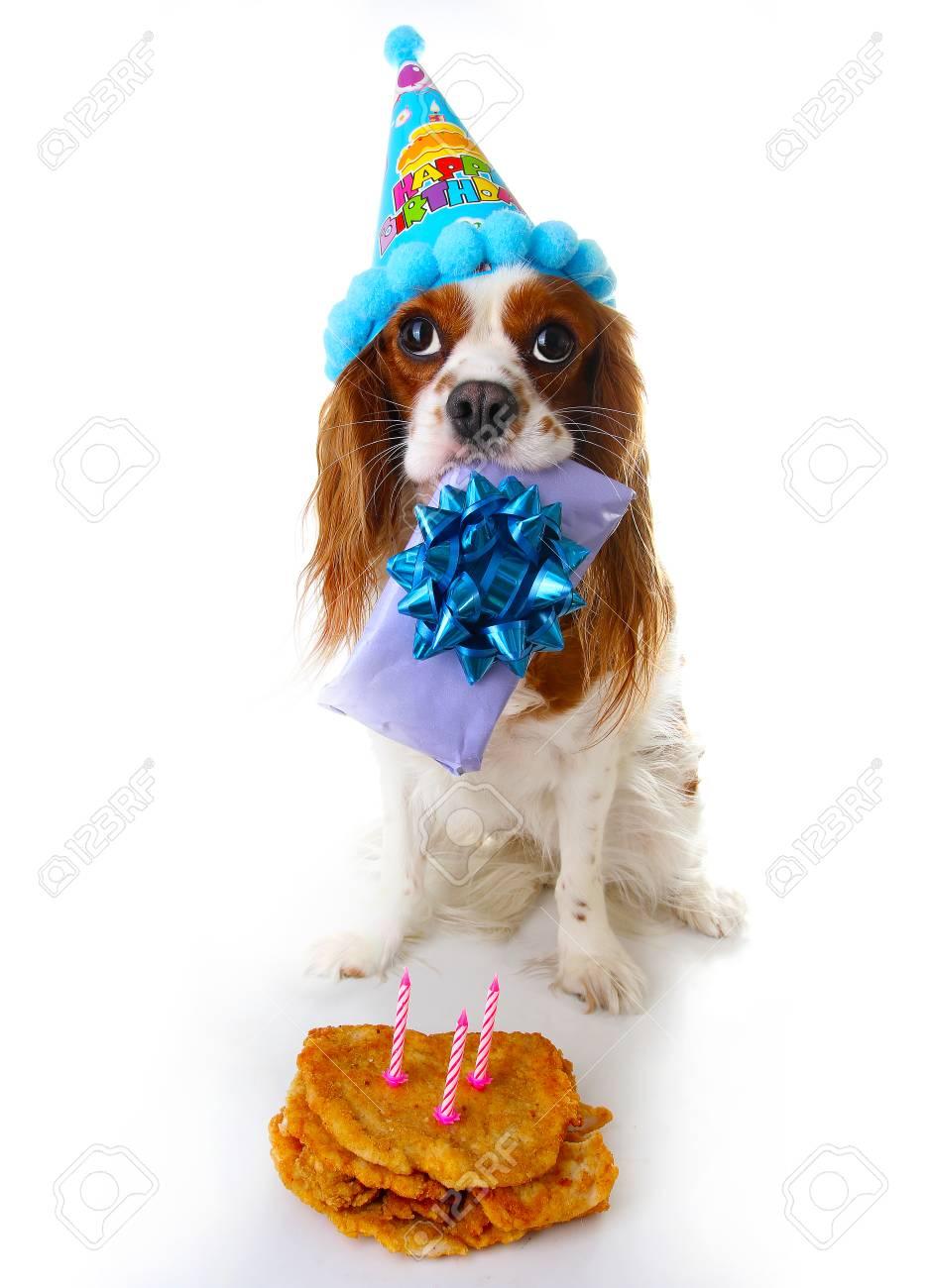 Cavalier King Charles Spaniel Puppy Dog Celebrate 3 Birthday
