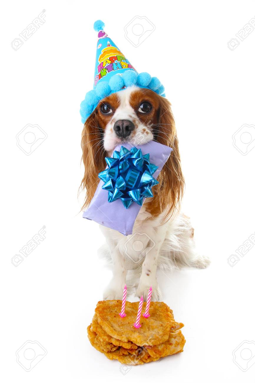 Happy Birthday Dog Photo Cavalier King Charles Spaniel Puppy Celebrate Stock