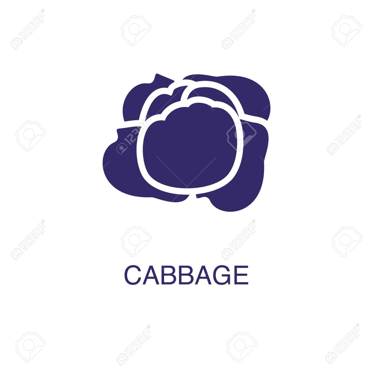 Cabbage element in flat simple style on white background. Cabbage icon, with text name concept template - 134450805