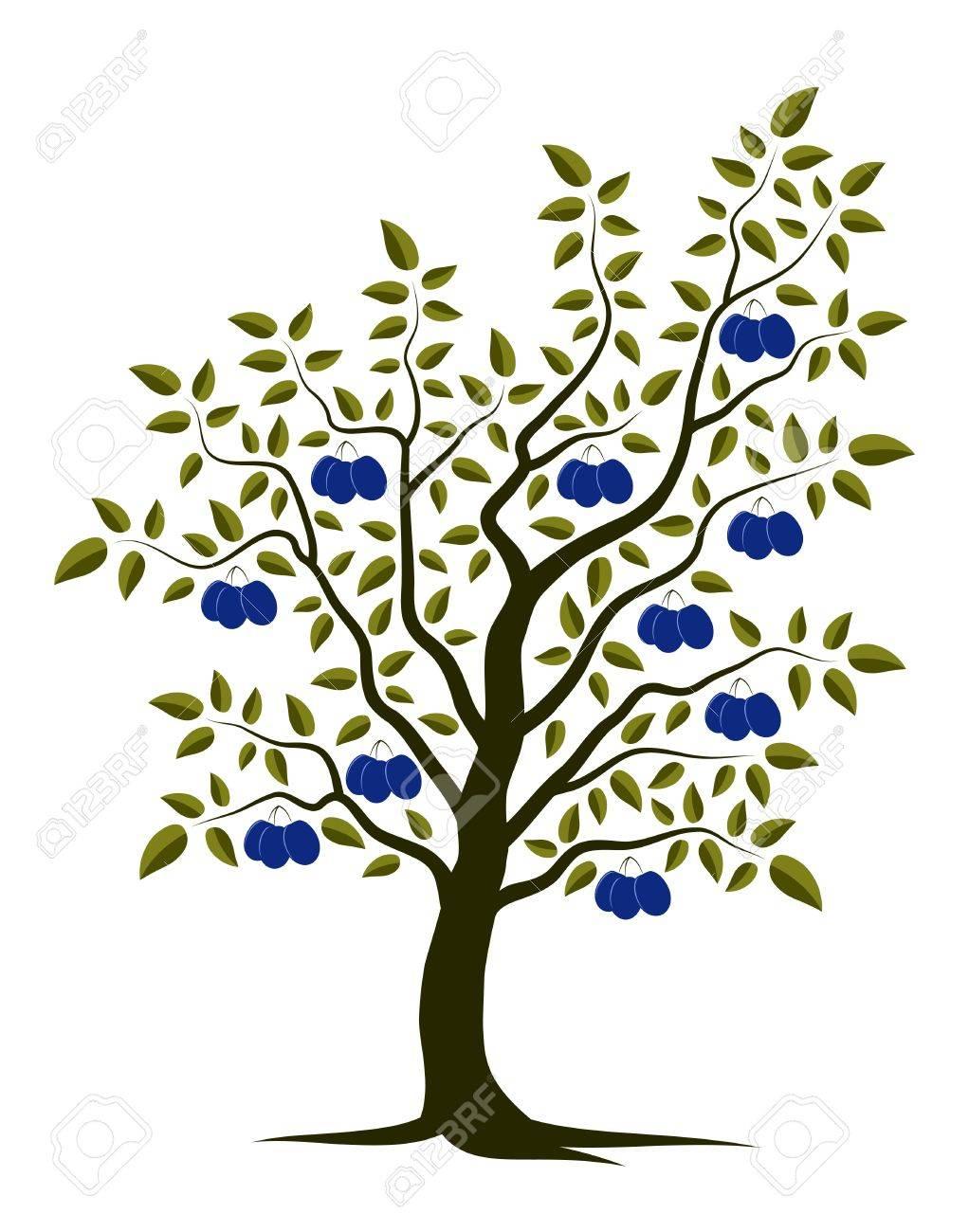 vector plum tree on white background Stock Vector - 12773244