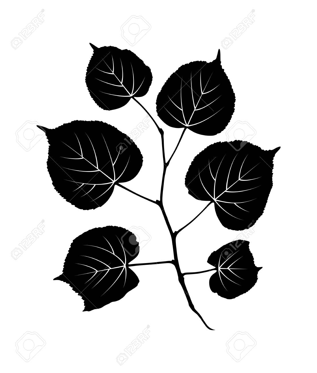 vector linden twig isolated on white background - 119130562