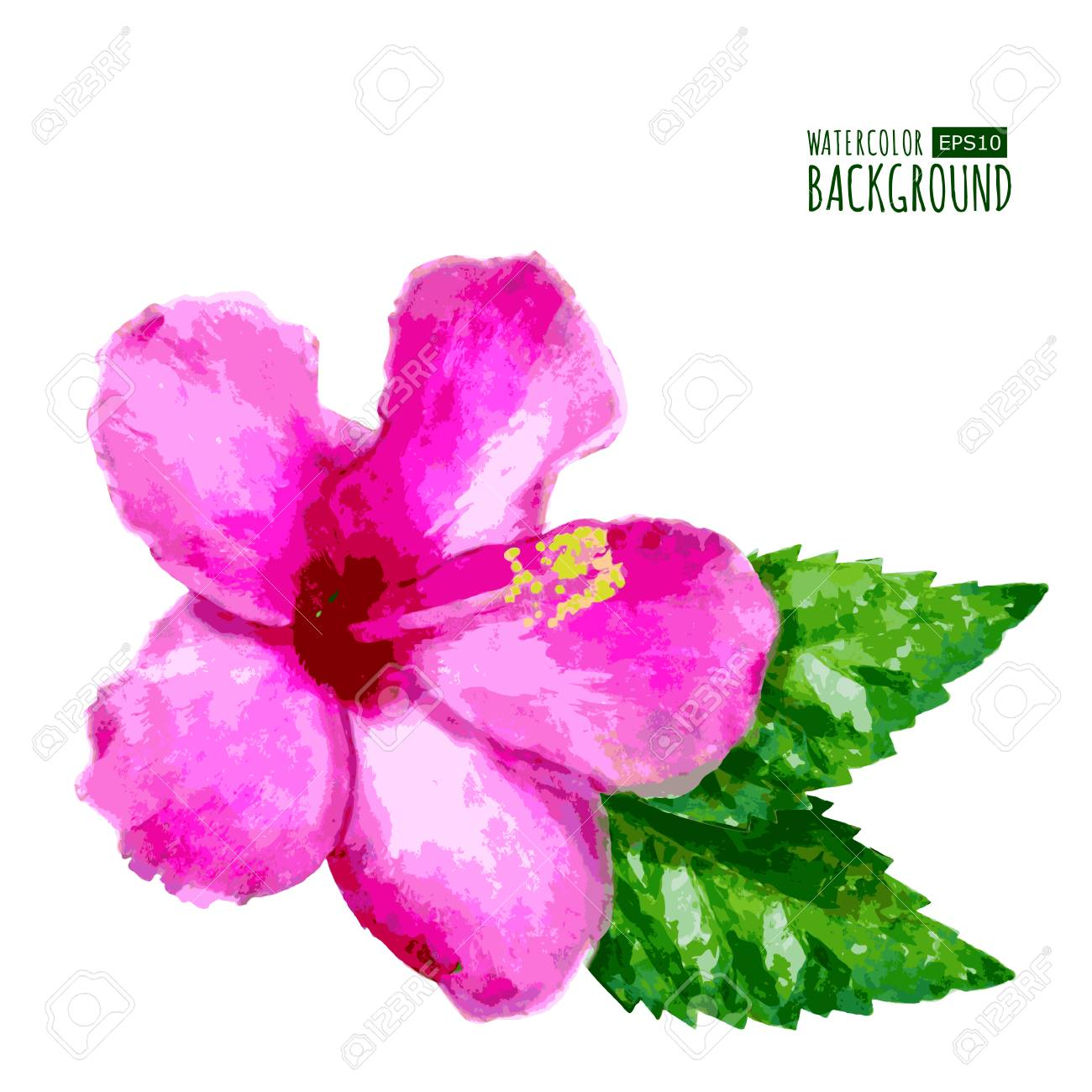 Watercolor vector background with pink tropical hibiscus flower vector watercolor vector background with pink tropical hibiscus flower floral summer illustration izmirmasajfo