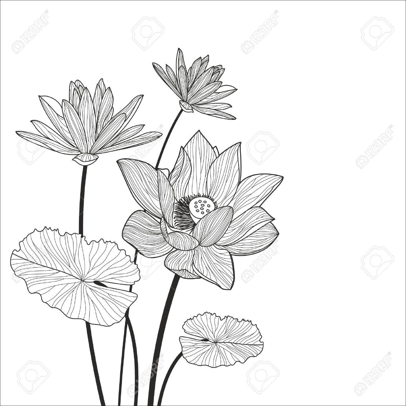 Beautiful Lotus Flower Line Illustration Vector Abstract Black
