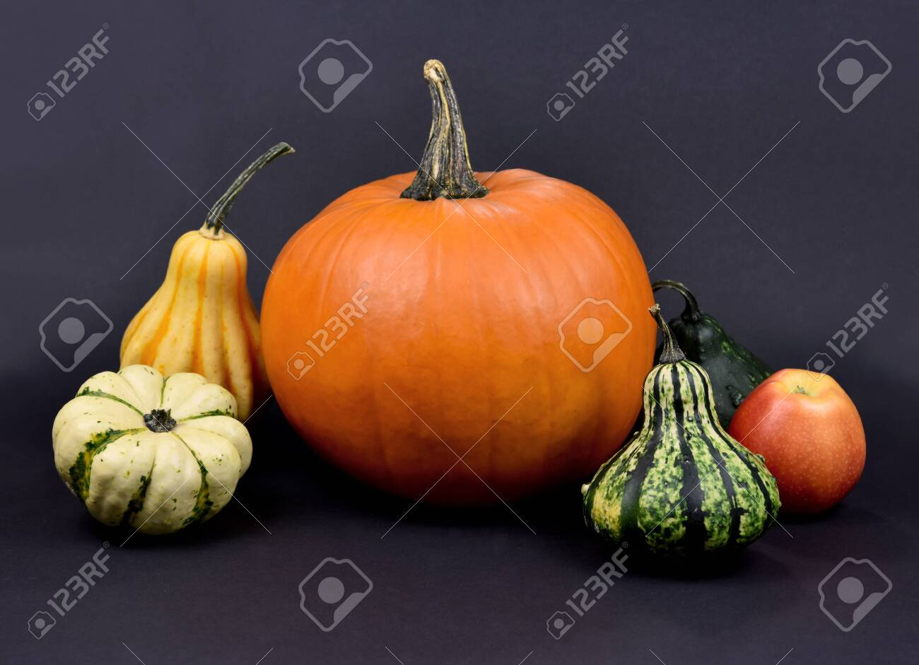 Different types of pumpkins and squash autumn still life stock images. Pile of pumpkins isolated on a dark background. Decorative pumpkins autumn still life stock photo. Beautiful autumn decorations - 155313206