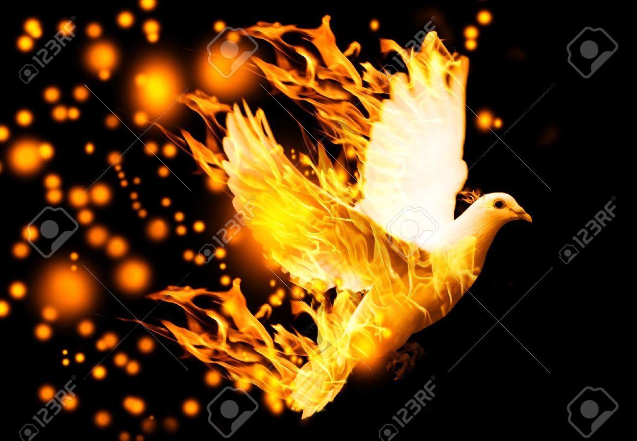 flying dove on fire, on black background - 19620388