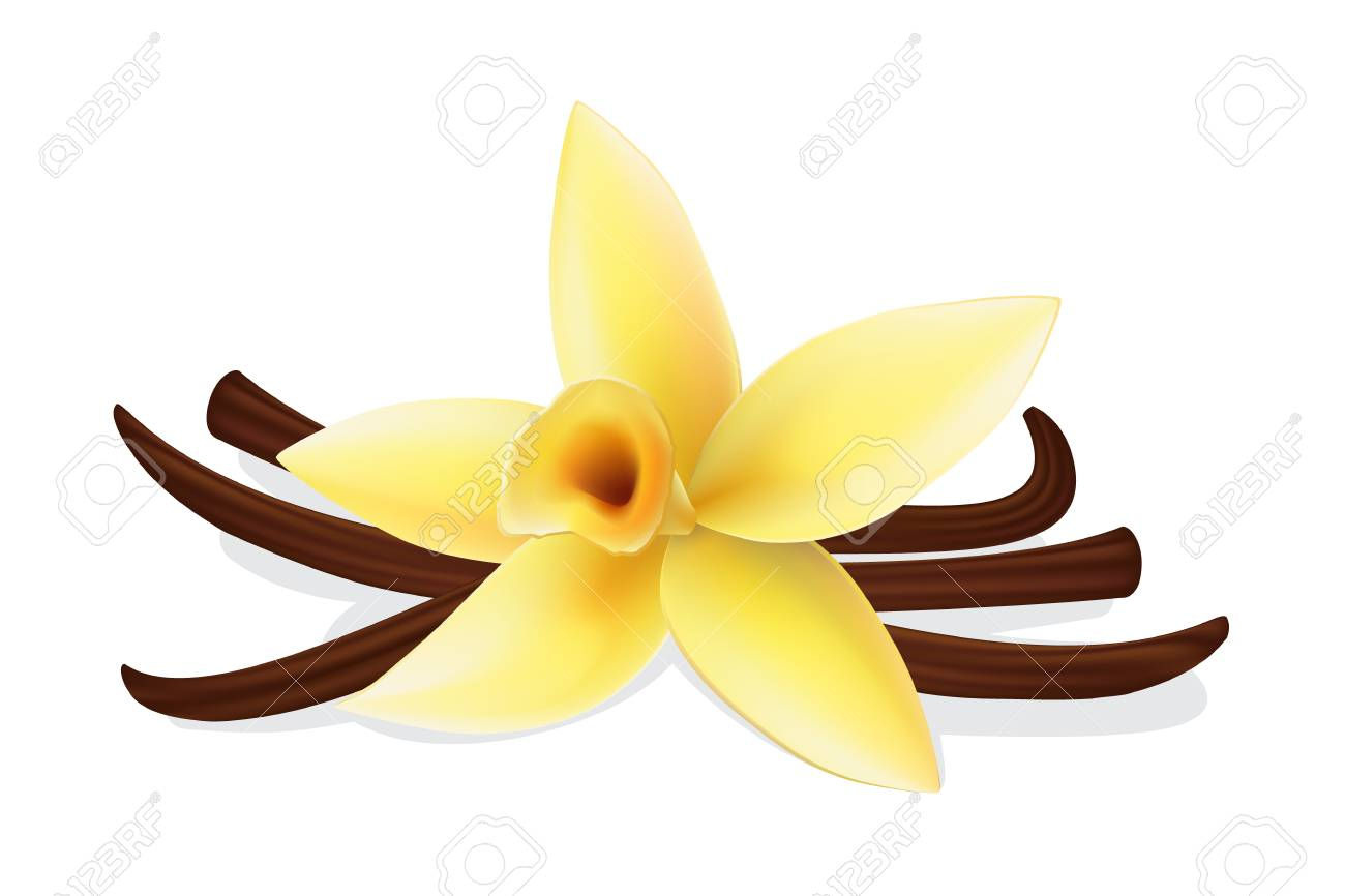 Realistic vanilla flower and pods, vector isolated objects on white background - 112340387