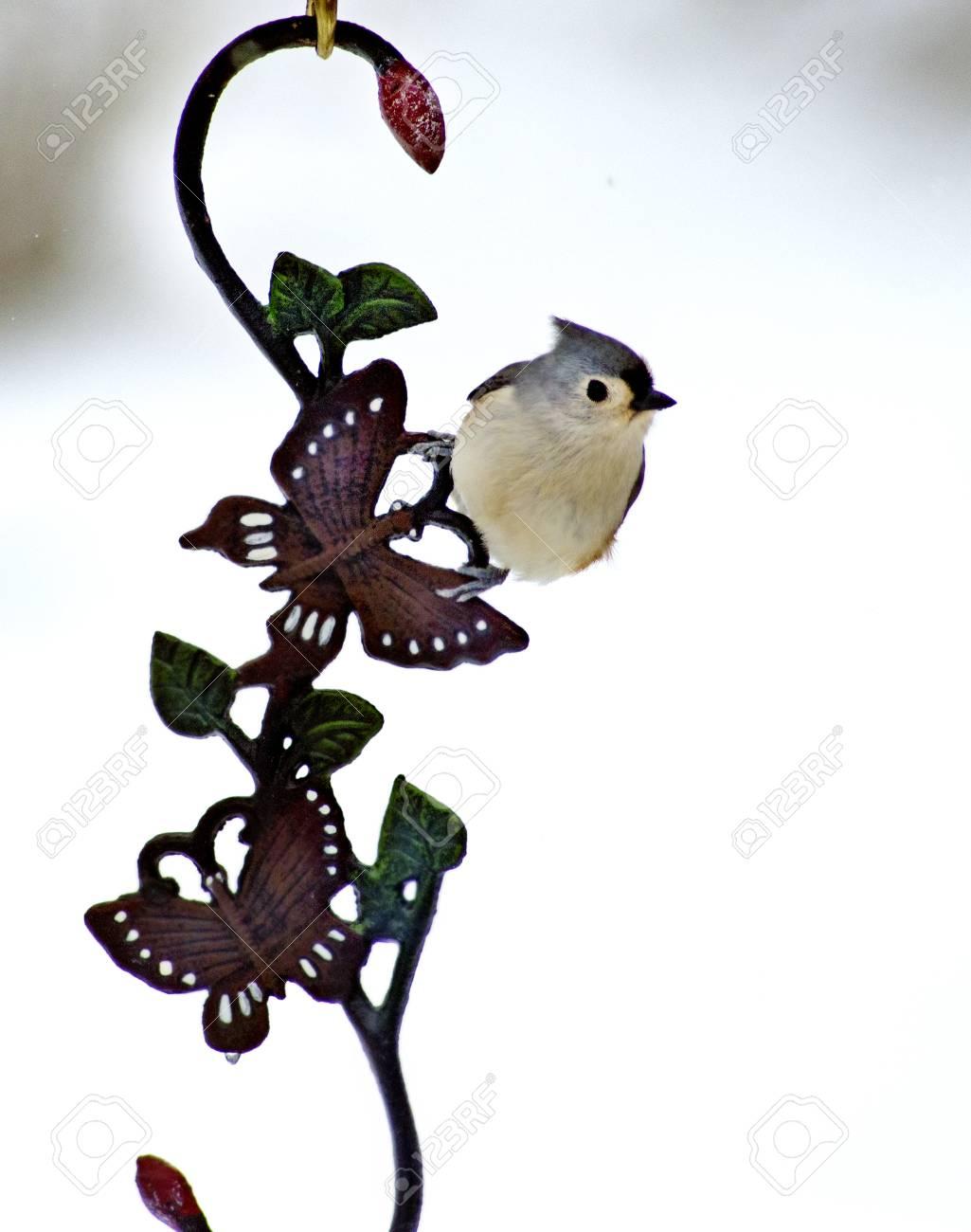 Indianermeise Vogel Hängt An Einem Haken Aus Metall Lizenzfreie