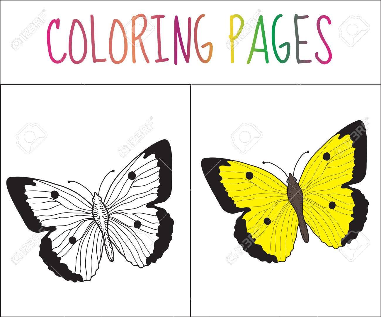 Colorear Página Del Libro. Mariposa. Croquis Y Versión En Color ...