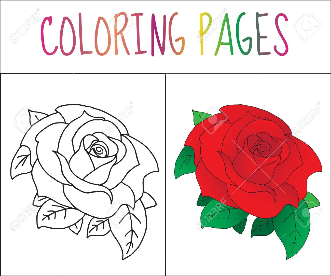 Coloring Book Page, Rose. Sketch And Color Version. Coloring ...