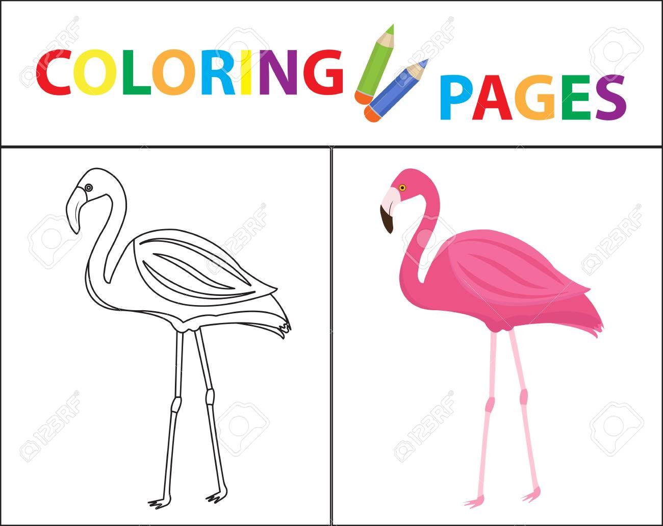 Página De Libro Para Colorear - Esbozo De Boceto De Flamingo Y ...