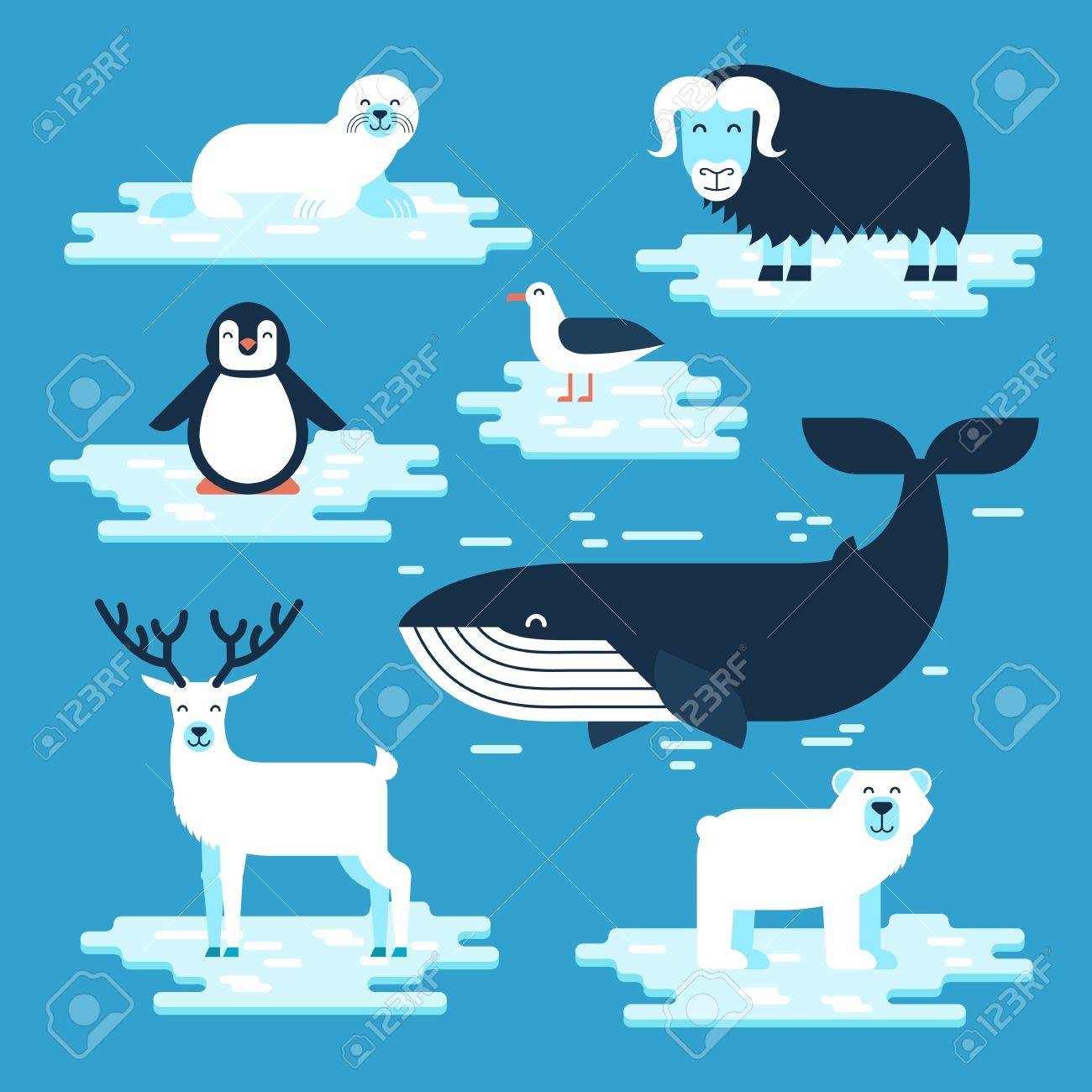 Arctic and Antarctic animals set, vector flat design illustration. Polar animals for infographic. Banque d'images - 80489053