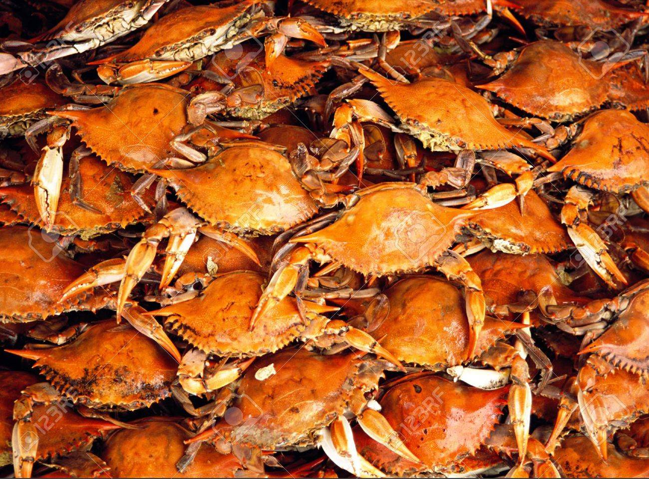 Steamed Blue Crabs Fresh From Marylands Chesapeake Bay Stock