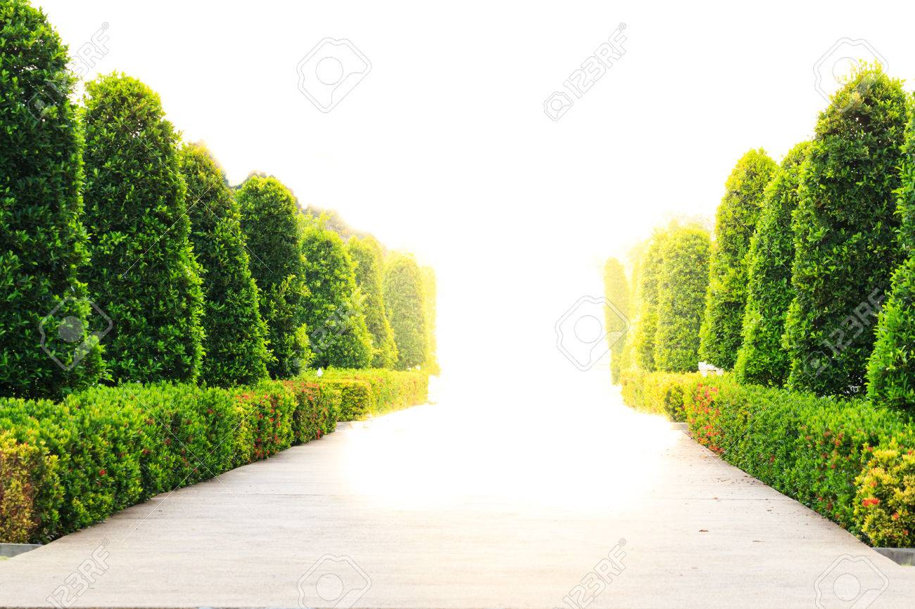 Tree garden with pathway - 28245326