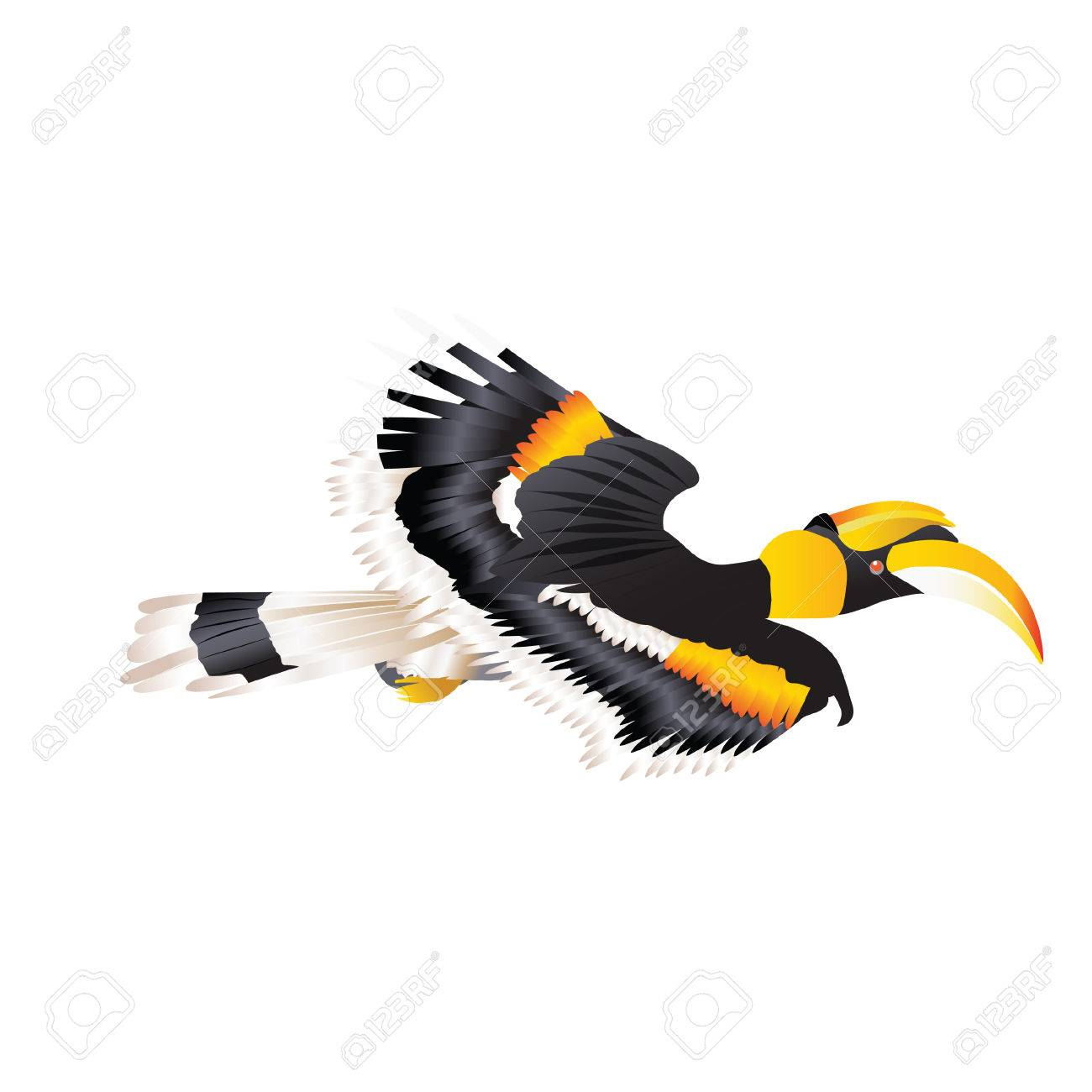 Great Hornbill Flying In Nature Royalty Free Cliparts Vectors And Stock Illustration Image 77356705