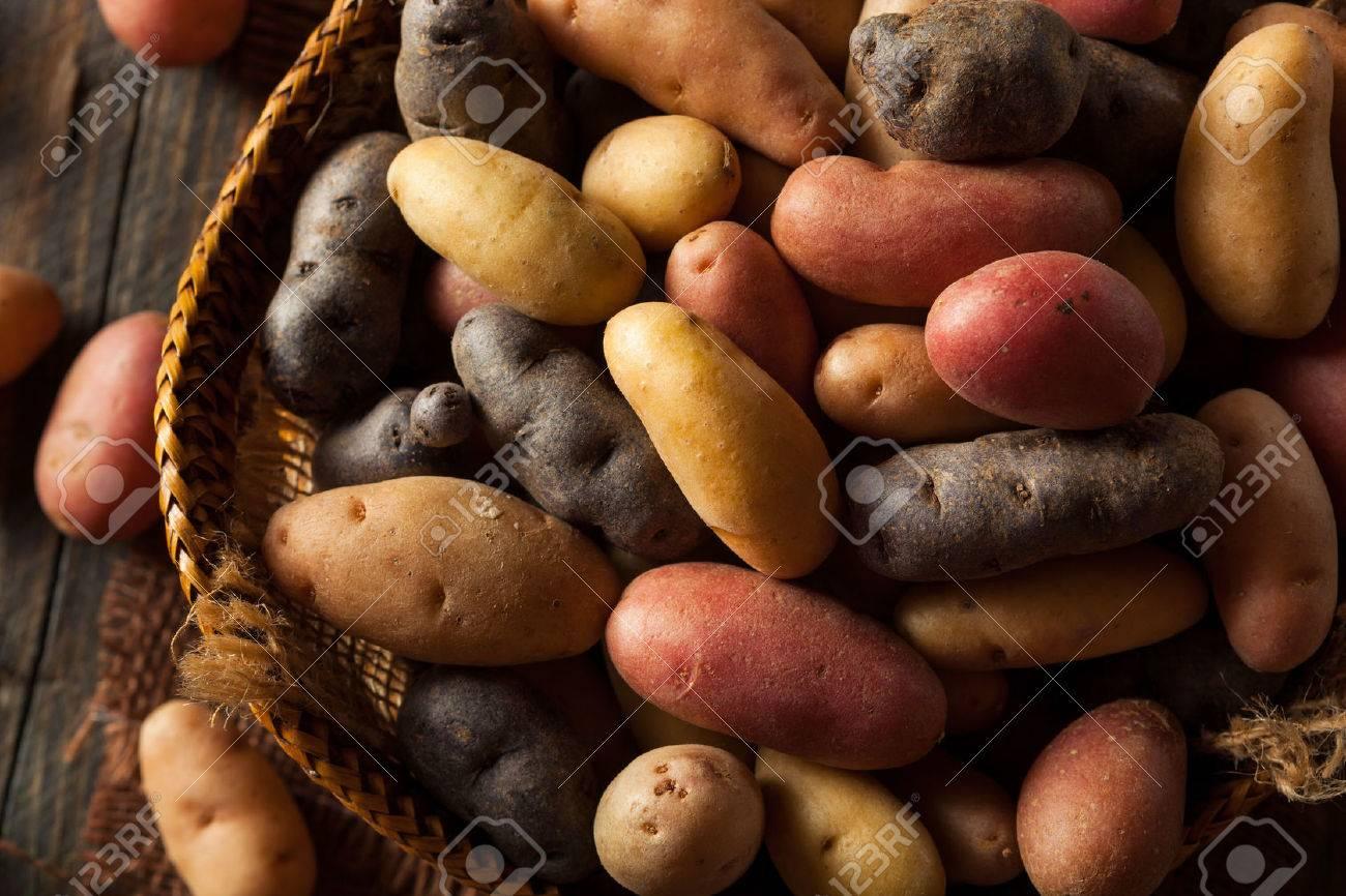 Raw Organic Fingerling Potatoes in a Basket - 43095397