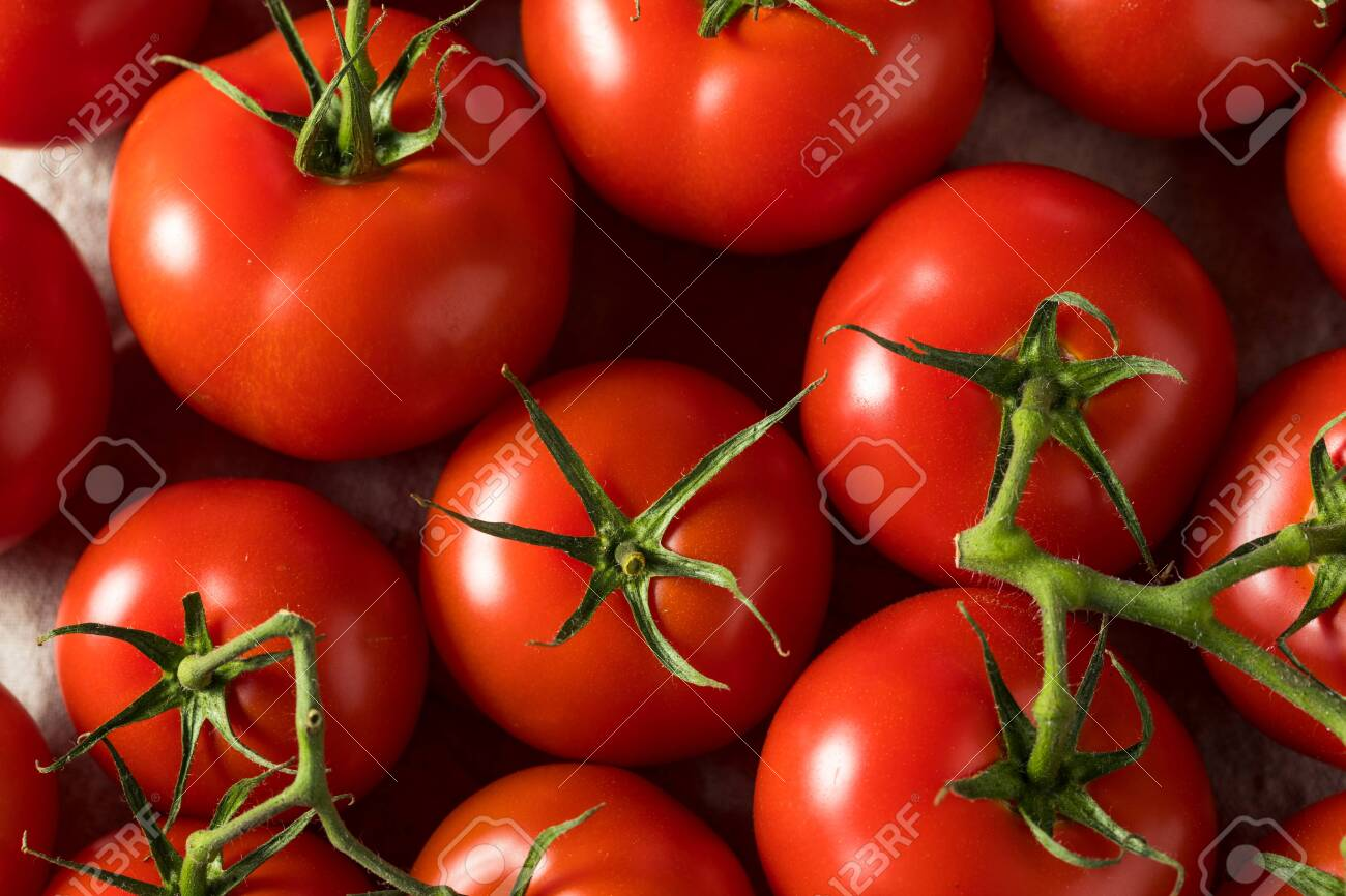 Raw Organic Vine Ripe Red Tomatoes in a Bunch - 147208130