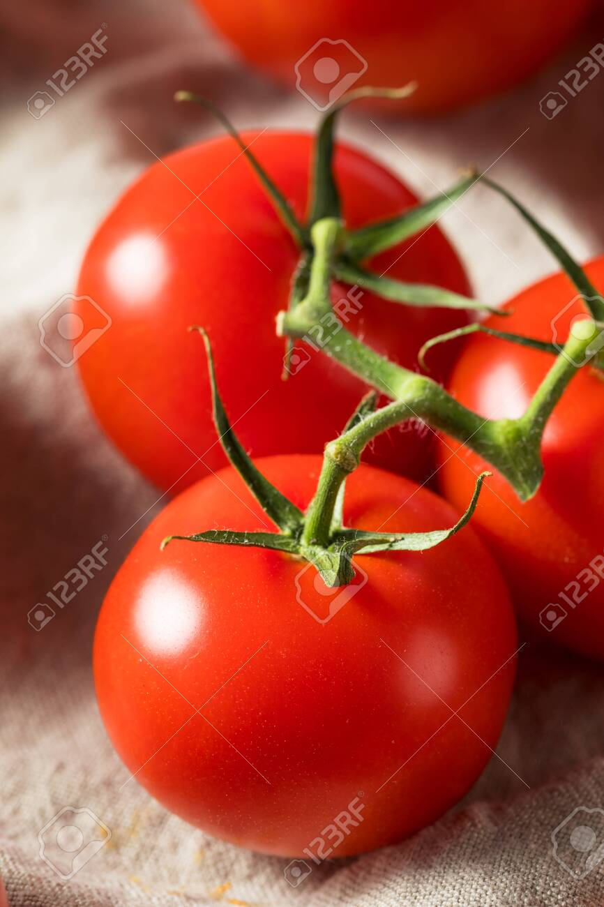 Raw Organic Vine Ripe Red Tomatoes in a Bunch - 147210961