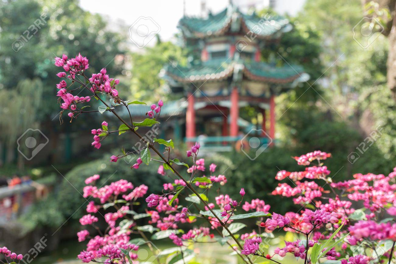 Beautiful Pink Flower With Chinese Temple Background Stock Photo