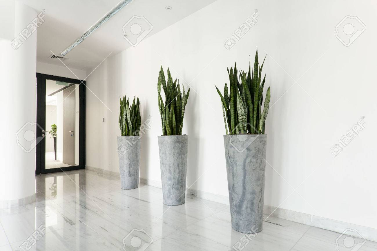 Beauty Plants On Corridor In Business Office Stock Photo   34889696