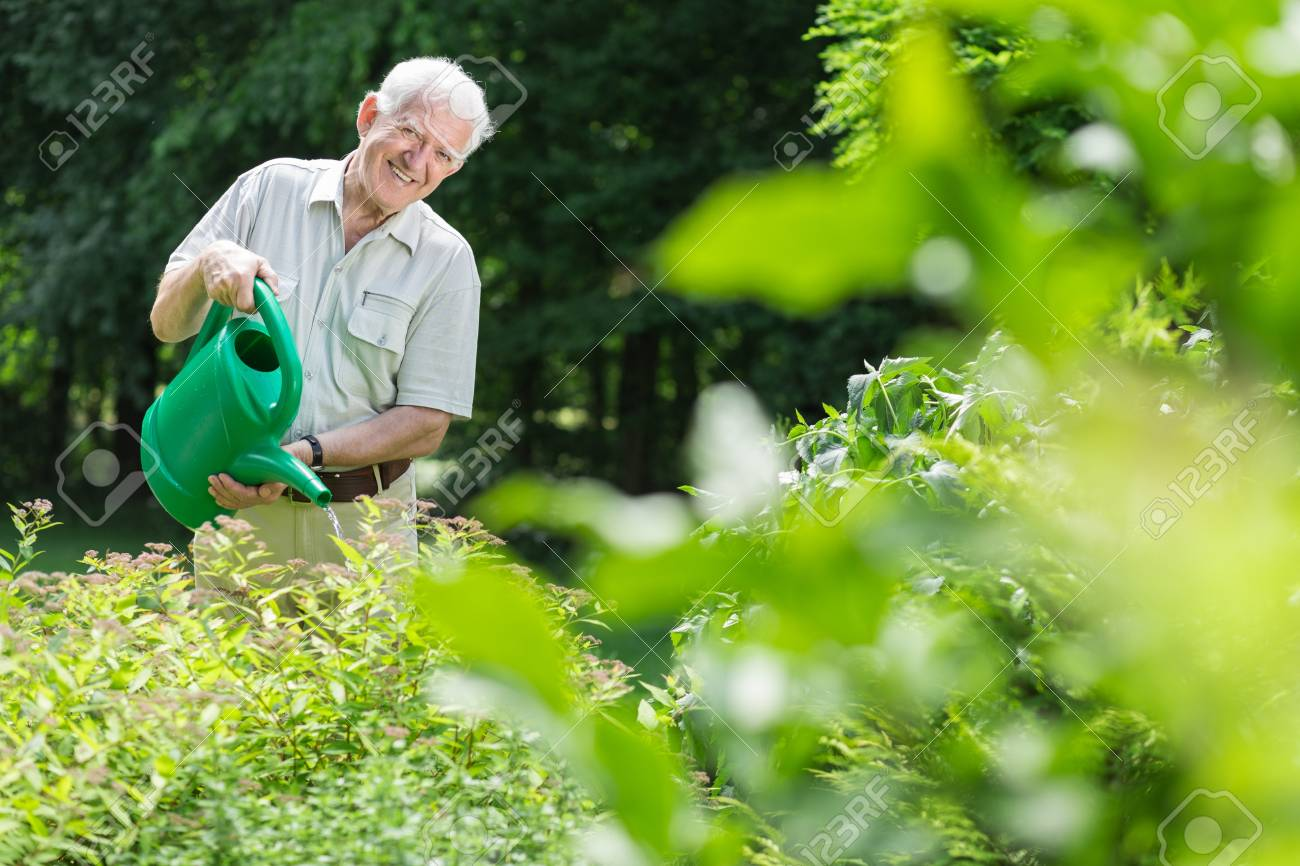 Elderly Man Taking Care Of The Garden Stock Photo Picture And