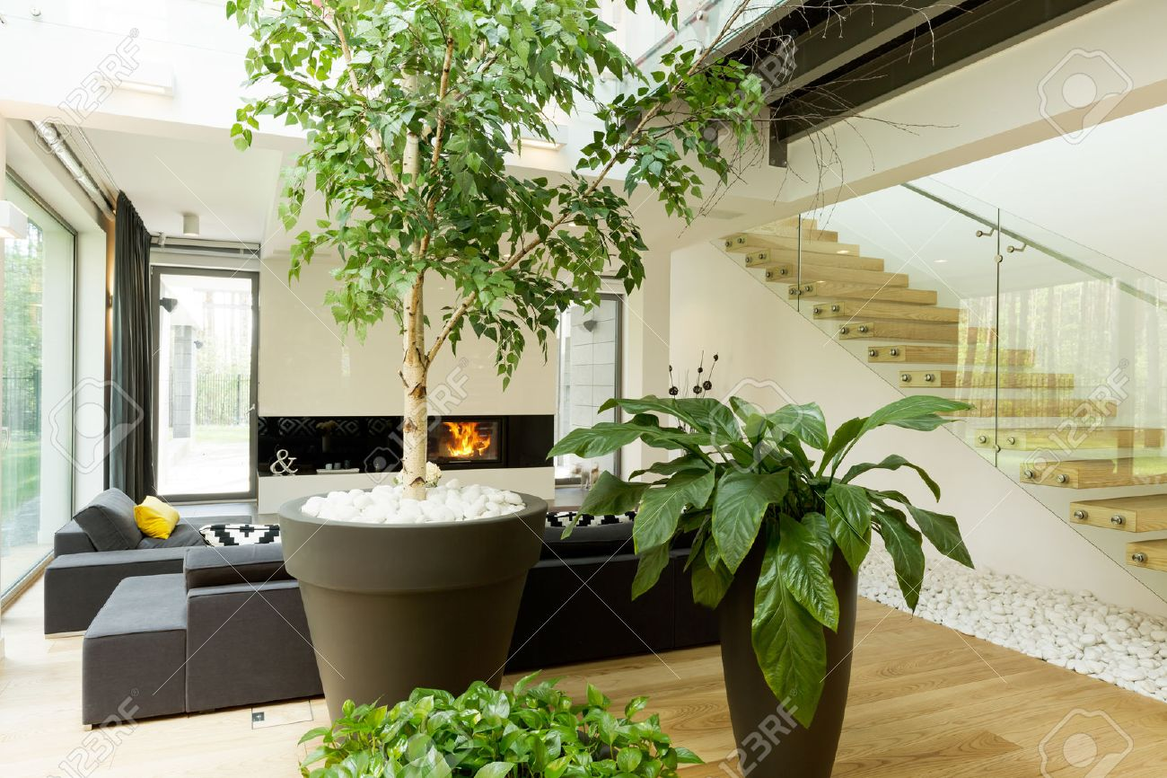 Shot Of Plants In A Modern Living Room Stock Photo, Picture And Royalty Free Image. Image 58409046.
