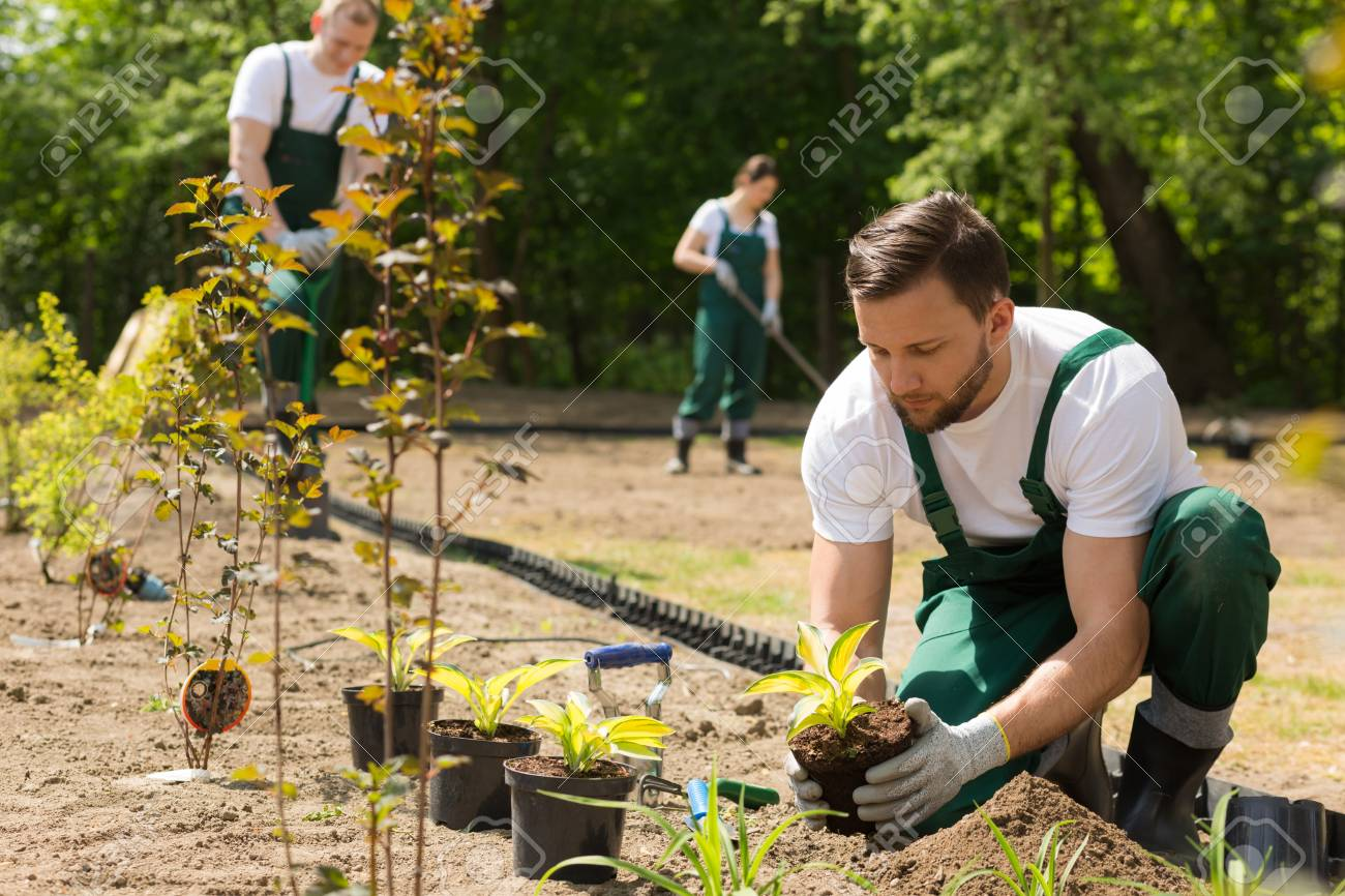 Team of the gardeners at work,planting,weeding and digging in the garden - 60258696