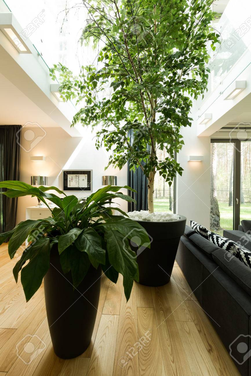 Birch tree in modern house creating your own micro climate stock photo 61273976