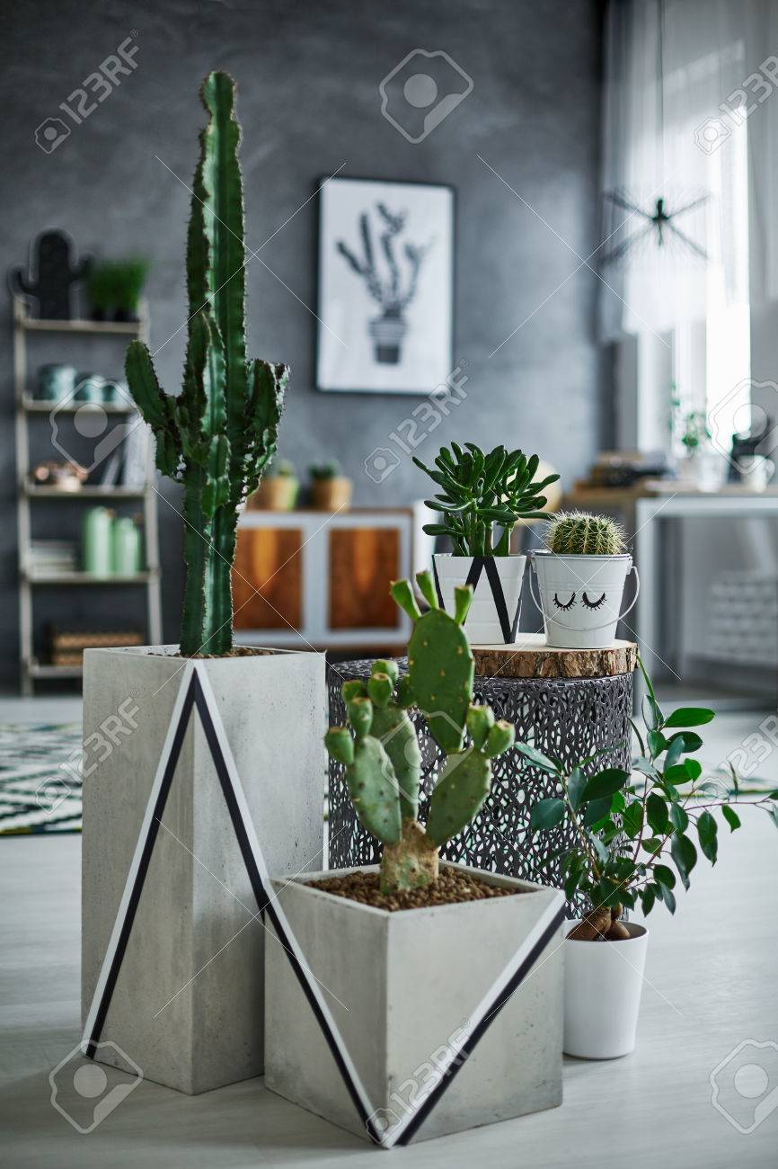 Grey Room With Cactus In Modern Decorative Pot Stock Photo Picture