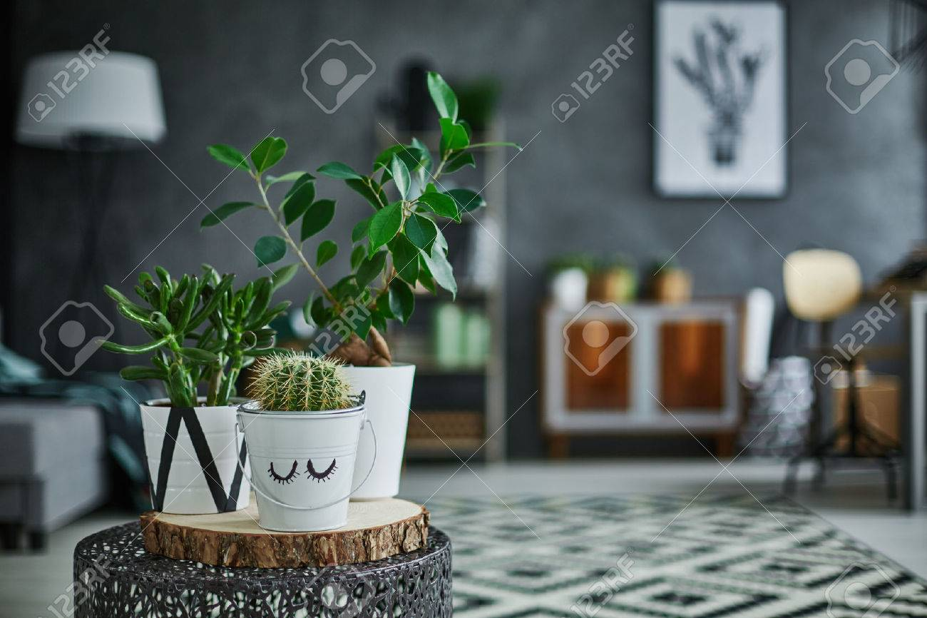 Decorative green houseplant in pot standing on metal table Standard-Bild - 68553786