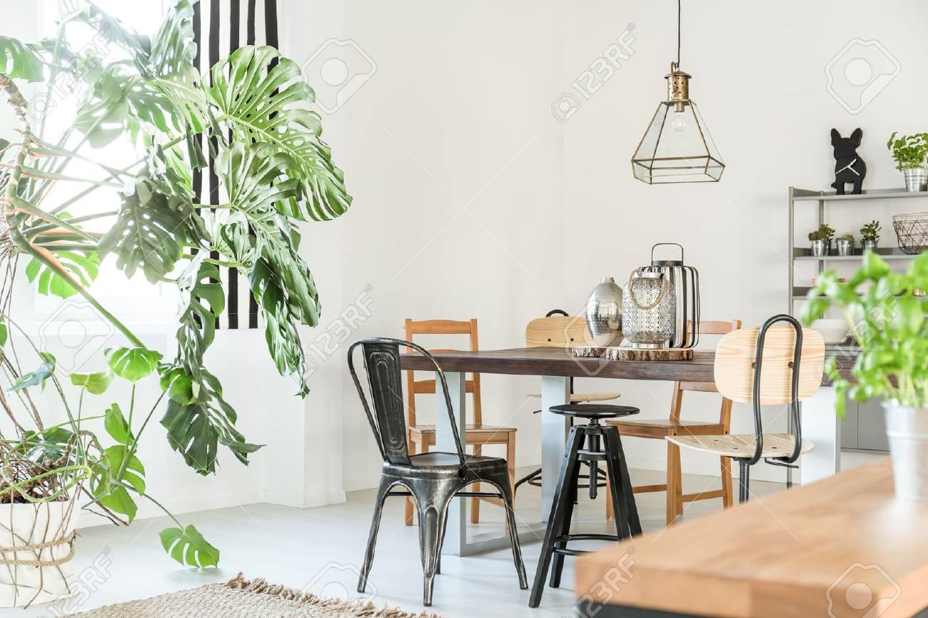 Luminoso comedor con mesa, sillas, estantería y una planta verde