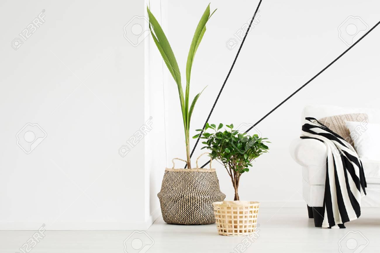 Pflanzen in Blumentöpfen in weißem, modern gestaltetem Wohnzimmer