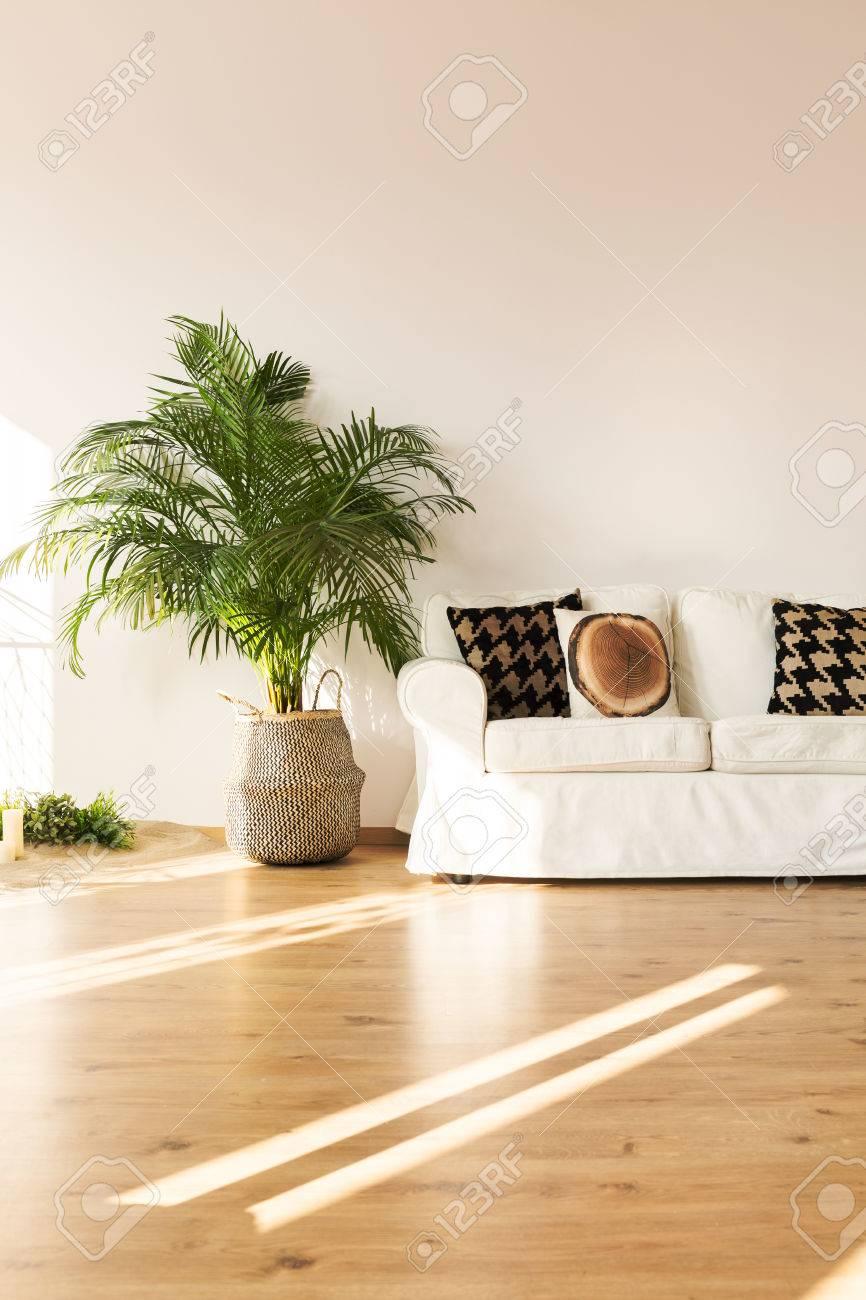 Einfache, Weiße Wohnzimmer Mit Sofa, Pflanze, Parkettboden ...