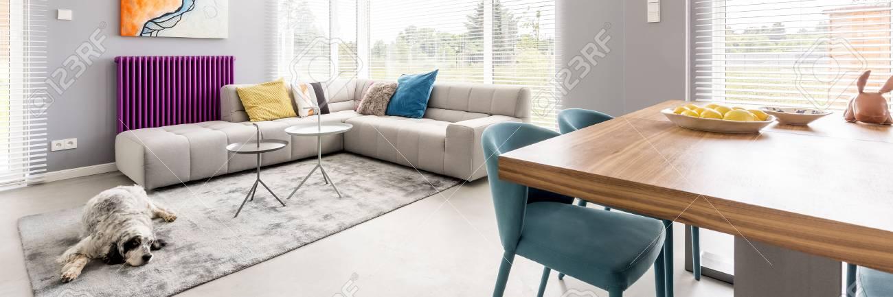 Pelzhund, Der Auf Dem Teppich Im Bunten Geräumigen Wohnzimmer Mit Violetter  Heizung Liegt Standard