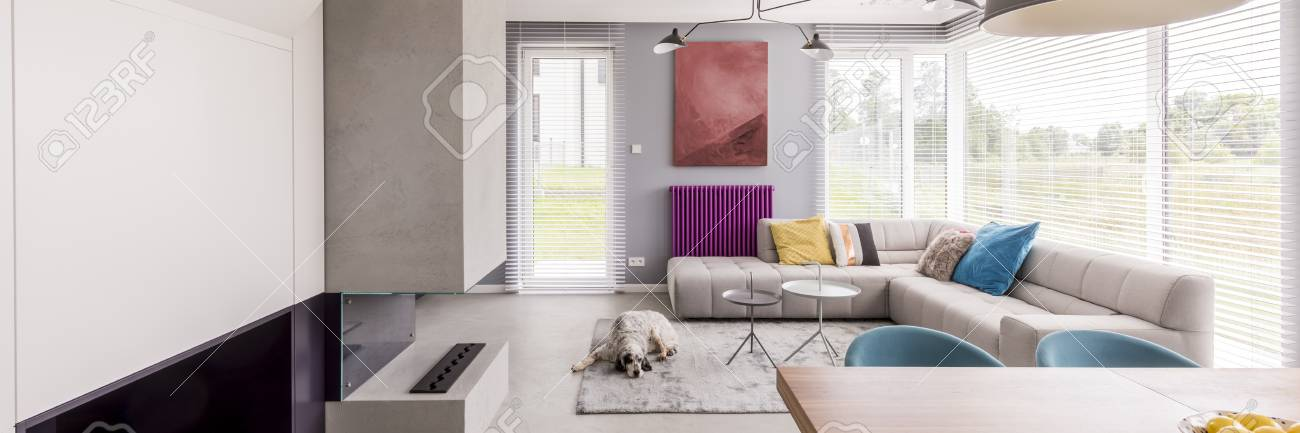 Spacious Living Room With Colorful Decorative Elements And With Dog Lying  On Grey Carpet Stock Photo