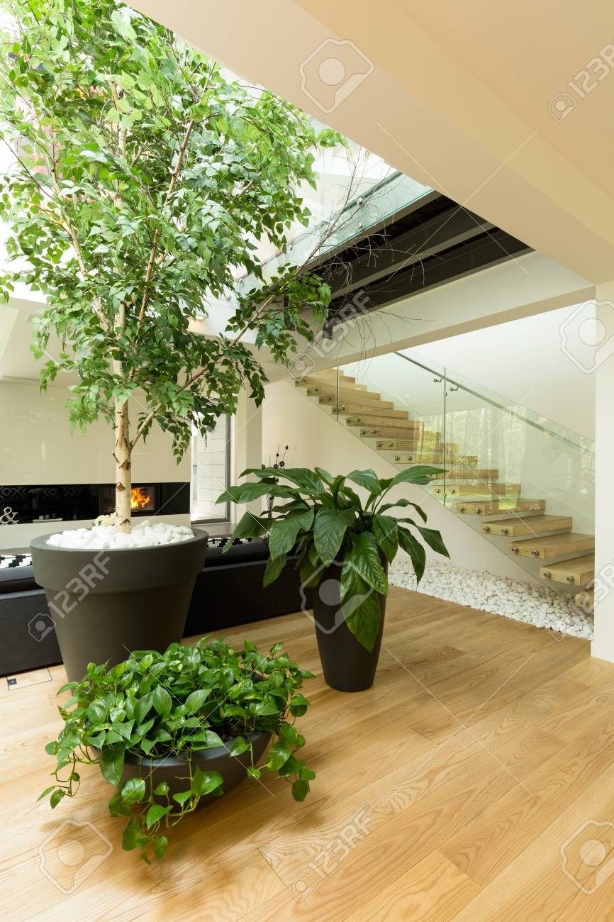 Modern corridor with home plants standing on the parquet in big flower pots stock photo